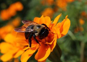 Cool-Bee